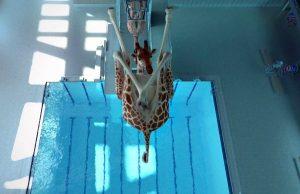 giraffe high chair giraffe diving