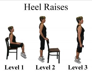 senior chair exercise heel raises