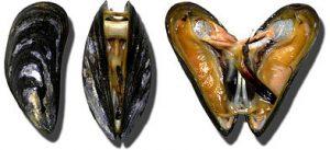 tete a tete chair px moules miesmuscheln mussel